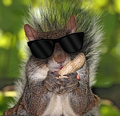 blindsquirrel
