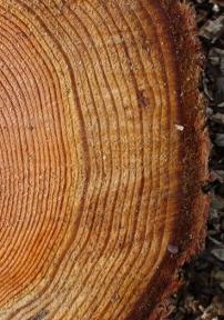 treerings2
